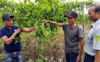 Điều tra 2 doanh nghiệp lừa đảo nông dân
