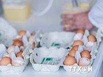 Italy tiếp tục phát hiện trứng nhiễm hóa chất thuốc trừ sâu Fipronil