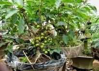 Loại cây trồng trong nhà giúp trừ tà khí, xua đuổi vận đen, tài lộc kéo đến