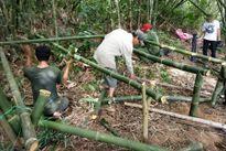 Thừa Thiên Huế: Dân dựng lán trại ngăn 'cát tặc' lộng hành