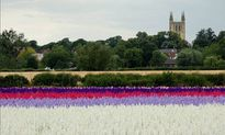 Vẻ đẹp thiên đường hoa mùa hè chỉ mở cửa 7 ngày mỗi năm