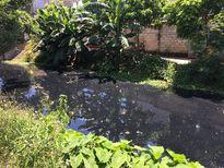 Nỗi khổ của hàng trăm hộ dân sống chung với ô nhiễm bên bờ mương Đò Vọ