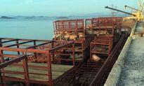 Tìm chủ tàu chở gần 7 tấn lợn chết bốc mùi hôi thối