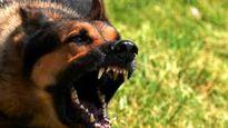 Đắk Lắk: Hai người tử vong vì bị chó dại cắn