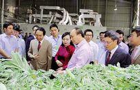 Cận cảnh 'Con đường thuốc Việt' của Traphaco