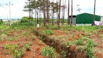 Đắk Nông: Xử lý cán bộ hoài mà rừng vẫn mất