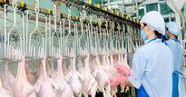Vô lý và thiếu công bằng: Thủ tục xuất gà đi khó vạn lần cho nhập