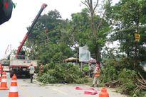 Hà Nội: Dịch chuyển cây xanh phục vụ thi công các hạng mục ngầm