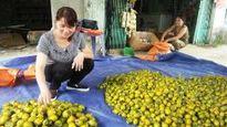 Hồng không hạt Bắc Cạn giúp dân vùng sâu giảm nghèo