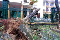 Hình ảnh người dân miền Trung oằn mình trong cơn bão số 10