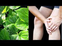 Người phải lên bàn mổ khỏi bệnh xương khớp nhờ kết hợp cây trong vườn với thảo dược