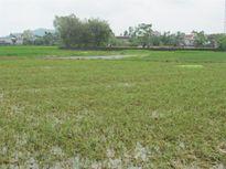 Thanh Hoá báo cáo thiệt hại nghìn tỷ sau bão số 10