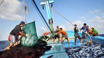Lựa chọn mô hình cho Nghiệp đoàn Nghề cá Việt Nam