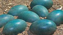 Phát hiện trứng màu xanh 'lạ' của loài khủng long cách đây 66 triệu năm
