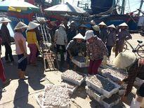 Chuyến biển sau bão, ngư dân Nghệ An trúng gần 30 tấn cá cơm