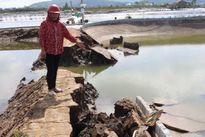 Nhiều tỷ phú nuôi tôm ở Nghệ An thành 'chúa chổm' sau bão số 10
