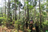 Lào Cai: Thanh tra đất nông, lâm trường quốc doanh