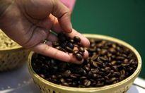 Giá cà phê trong nước ngày 20/9/2017