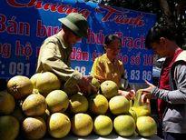 Người dân Nghệ An bán bưởi Phúc Trạch giúp đồng bào vùng tâm bão