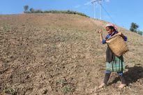 Điện Biên: Trên 740.000 ha đất bị thoái hóa