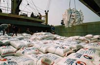 Bangladesh muốn nhập 50.000 tấn gạo đồ