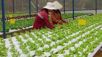 TPHCM vận động hộ nông dân lên… doanh nghiệp