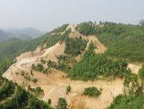 Phú Thọ: Đất tặc tung hoành, chính quyền im ắng?