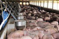 Chiến dịch 'giải cứu' lợn: Bộ Công an đã tiêu thụ thịt vượt chỉ tiêu