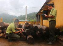 Điện Biên: Xử lý 322/489 vụ vi phạm Luật Bảo vệ và Phát triển rừng