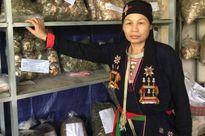 'Thần y núi Tản' có trọng trách nhân giống cây thuốc quý cứu người bị bệnh xương khớp