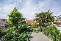 Độc đáo căn nhà có cây đâm xiên giữa lòng Sài Gòn