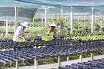 Nông nghiệp thông minh - hãy cùng hành động