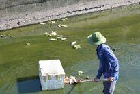 Quảng Nam: Cá chết hàng loạt trên hồ Nguyễn Du