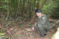 Tiếp nhận và thả về tự nhiên cá thể Rùa Núi viền quý hiếm