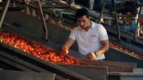 'Cà chua đổi thịt' với Nga: Thổ Nhĩ Kỳ nói không
