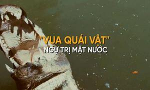 Sự tàn bạo của 'quái vật' khổng lồ vua đầm lầy Amazon