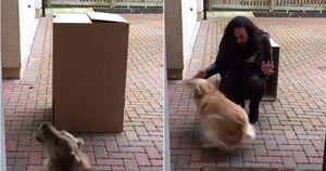 Nhận món quà trong chiếc hộp bí mật, chú chó nhỏ cuồng cả chân vì quá bất ngờ