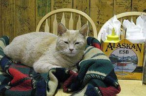 'Mèo thị trưởng' qua đời