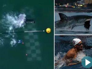 Kết quả cuộc đua độc nhất vô nhị giữa Phelps và cá mập