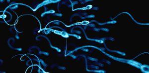 Khả năng sinh sản của nam giới giảm 50% trong 40 năm