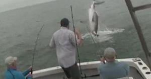 Cá mập trắng ba mét phi thân cướp cá của ngư dân