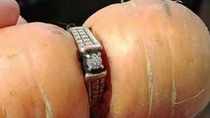 Đánh mất nhẫn kim cương 13 năm, tìm lại được trên... củ cà rốt