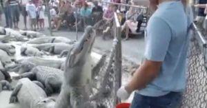 Trêu đùa với cá sấu, chàng trai phải nhận 'cái kết đắng'