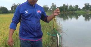 Thú vui cắm cần câu cá lóc bằng mồi nhái ở Kiên Giang