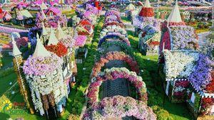 65 triệu bông hoa rực rỡ giữa Dubai khô cằn