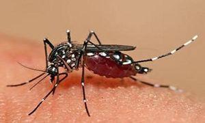 Góc tối đằng sau cuộc chiến chống sốt xuất huyết