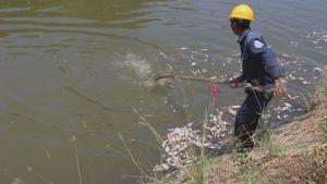 Đà Nẵng: Cá chết bất thường nổi trắng kênh Phú Lộc