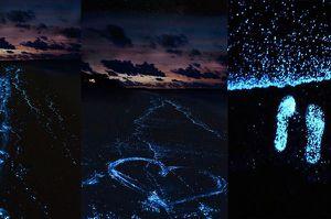 Đẹp mê hồn bãi biển phát sáng như xứ xở thần tiên ở Maldives