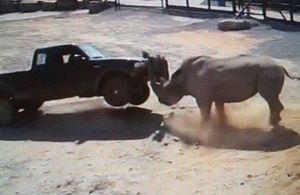 Clip: Những pha tấn công người kinh hoàng của tê giác