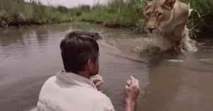 'Đứng tim' xem sư tử chạy đến ôm chầm người đàn ông
